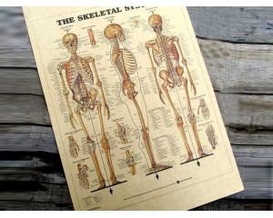 Винтидж постер Три аспекта на човешкия скелет