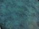 Тапет в солидно тюркоазено ефект паун